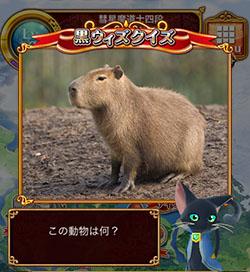 kurowizquiz-kapibara