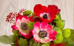 kurowizquiz-anemone